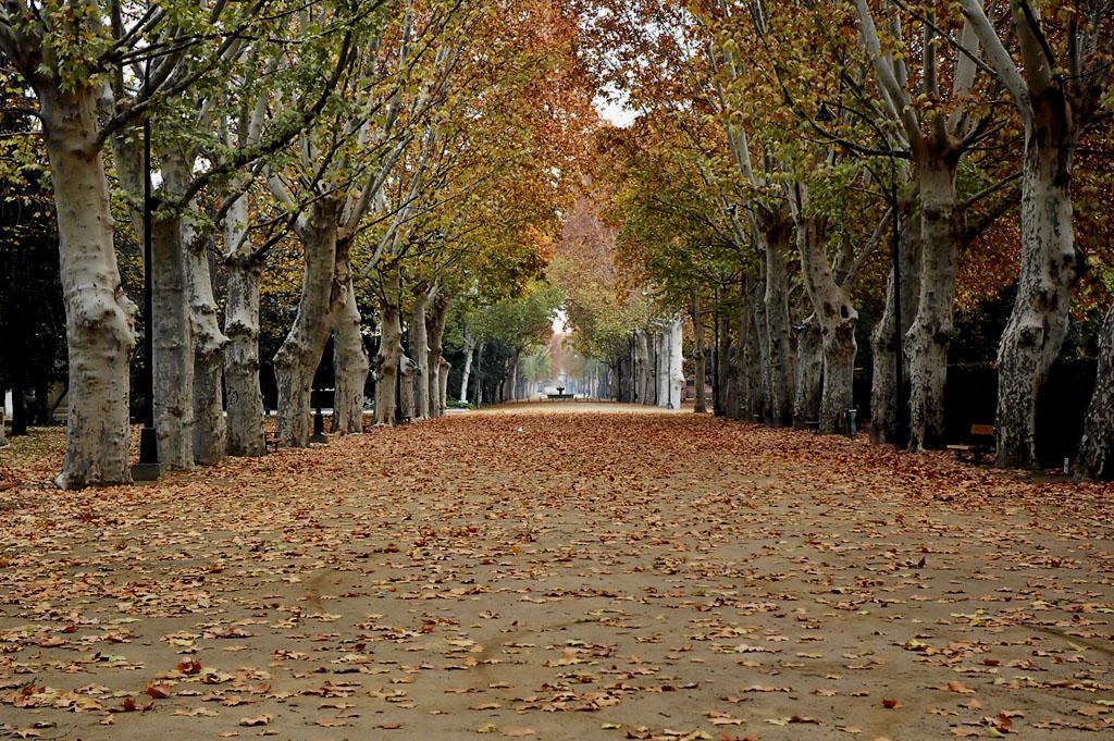 campos eliseos en otoño