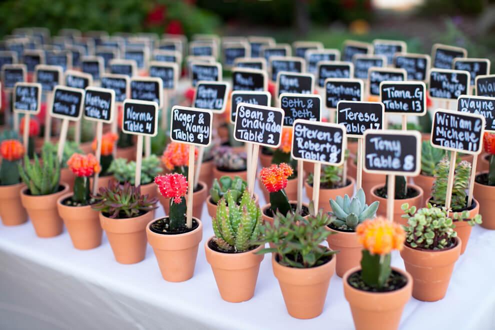 cactus boda