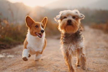 Cómo preparar tu hogar cuando adoptas un perro