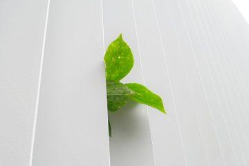 consejos prácticos ecológicos para una vida más verde