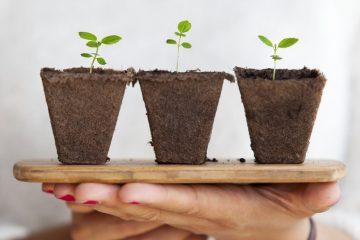 Cómo crear un jardín dentro de casa