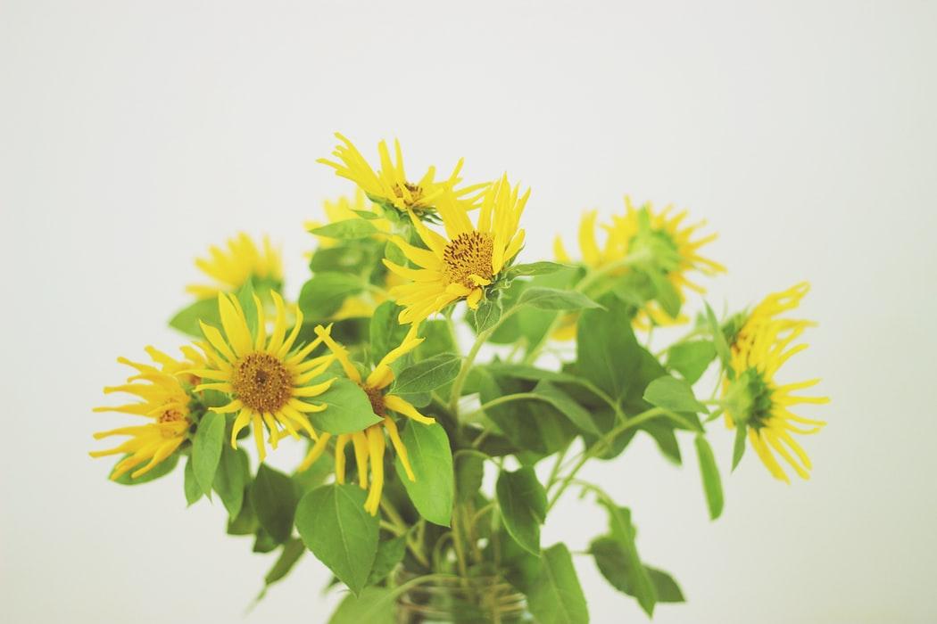 elegir las flores adecuadas