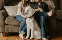 Cómo hacer una casa apta para mascotas