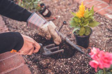 beneficios de la jardineria en casa