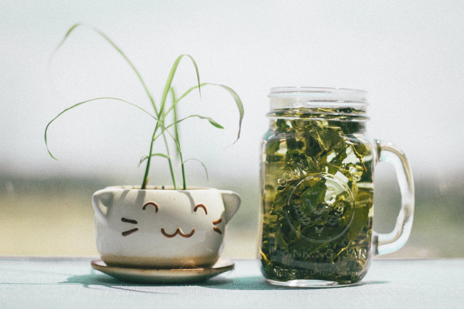 tónico de té verde