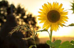 flores que sirven para el cuidado de la piel